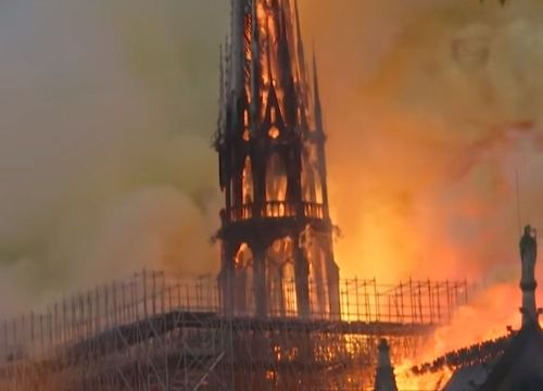 Pożar Notre-Dame. Oświadczenie WWF